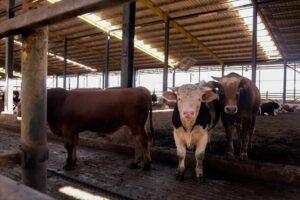 Karkas Çiftliği Galeri - 3