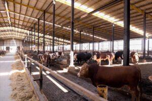 Karkas Çiftliği Galeri - 4